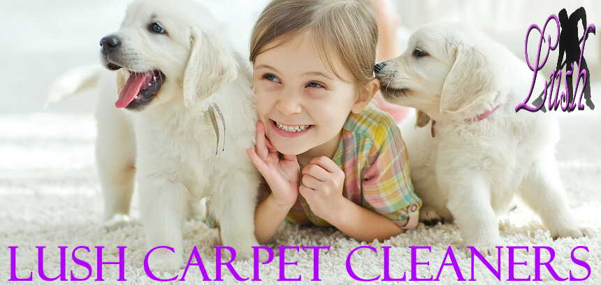 carpet cleaning dogs and child manchester